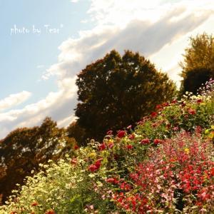レンズ越しに見た風景 秋の訪れ