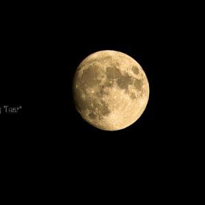 月と私と小指