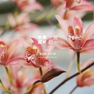 お花のおすすめ人気サブスク7選!定期便でおしゃれな花が届く【決定版】