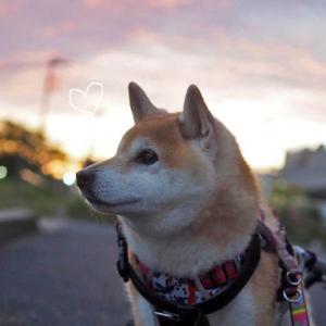 【日常写真】秋の夕焼け…