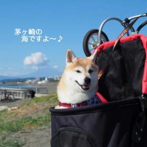 柴犬あん、湘南ガールへの道! - その1 -