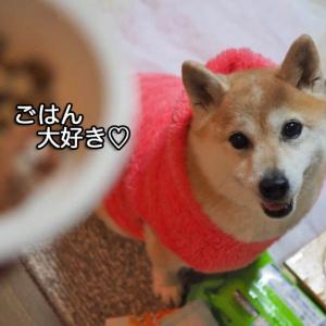 今年もあんは、ごはんにGO〜!!!!!!