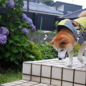 散歩前・散歩後♪