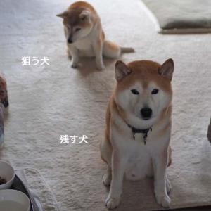 残す犬、狙う犬