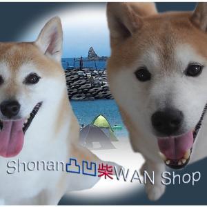 【お知らせ】保護犬・保護猫 支援企画のお知らせ