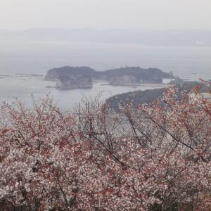 桜強化週間の年度末。春を迎えに、ちょっと近畿の下側まで。①
