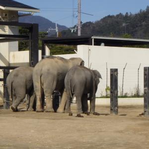 京都市にある動物園、その名も「京市市動物園」!
