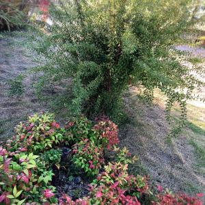 【サロンの庭写真】ガーデニングの季節!お洒落な庭にするには