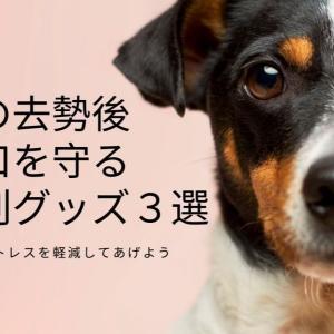 犬の去勢後の傷口を守る便利グッズ3選!