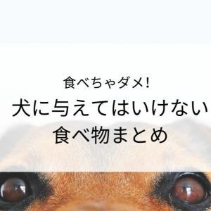 犬が食べたらダメなものまとめ。愛犬の為に知っておこう!
