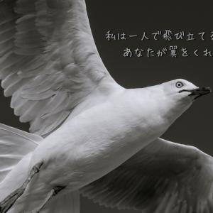 【写真詩15】一人で飛び立てる