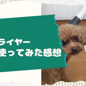 【レビュー】犬用ドライヤー1年半使ってみた感想