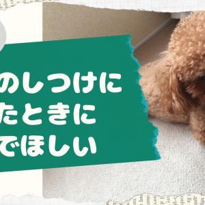 愛犬のしつけに疲れたときに読んでほしい