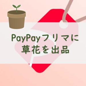 PayPayフリマに草花を出品:お花ノート