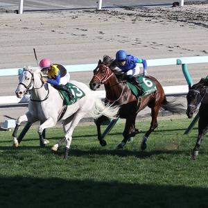 【競馬で副収入】札幌2歳ステークスGⅢ【2021】