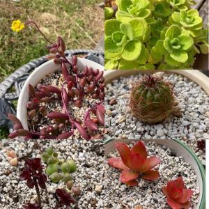 多肉植物と自閉症児、似ている説