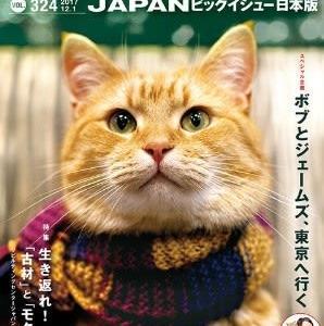 茶トラの猫「ボブ」