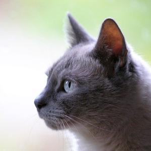 黒いネコに見られた