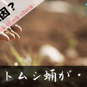 【カブトムシ蛹】カビが原因?出てこない=死んでるかも(7月末)