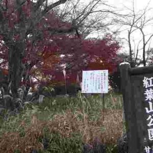 2020-11/27(金)甘楽総合公園の紅葉と戯れ遊ぶクロ♡
