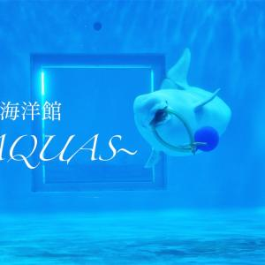 行かないとわからない島根海洋館アクアスの魅力〜AQUAS〜へ行ってきた。