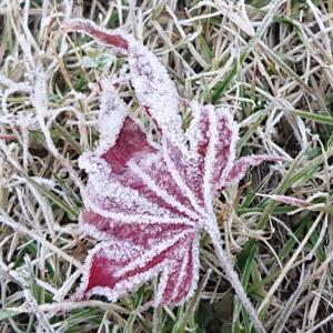 寒い朝2020.11.30