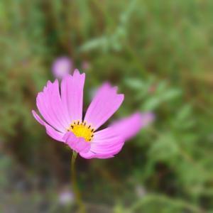 朝散歩の花&run ♬青春のリグレット(今井美樹)