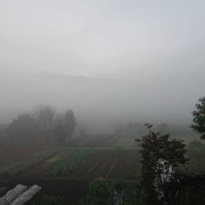 今朝の濃霧