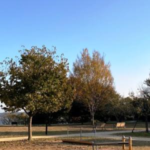 我孫子古墳巡りポタの始まり…高野山桃山公園の『前原古墳』