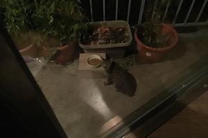 『ネコも…オラも…正座して…』