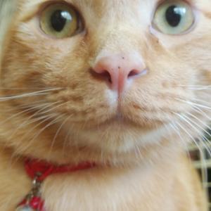 猫かわいいぬかわいい