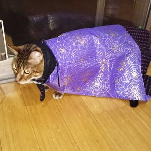 ハロウィン  猫ちゃん