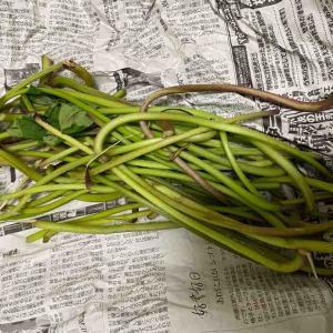 サツマイモの茎