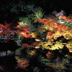【京都紅葉情報】秋のライトアップ名所まとめ2020