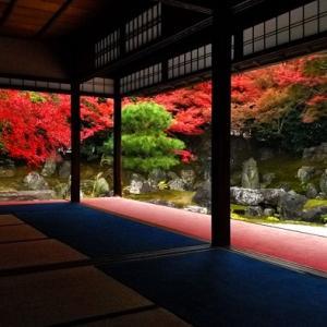 【京都紅葉情報】圓徳院の見どころ