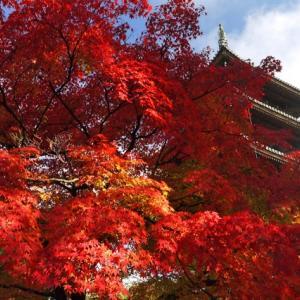 【京都紅葉情報】紅葉で観る京都の世界遺産おすすめ5選