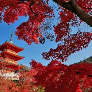 【京都紅葉情報】2020年・京都の紅葉「総まとめ」