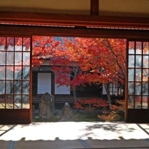 【京都紅葉情報】12月でも楽しめる京都のおすすめ紅葉スポット