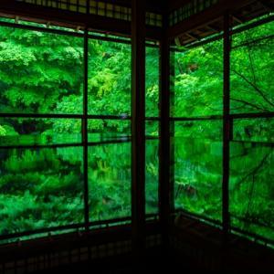 【花ごよみ】新緑の京都!「青もみじ」のおすすめ定番スポットから穴場までを一挙ご紹介!