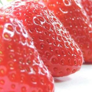 イチゴ(苺)の育て方