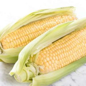 トウモロコシ(玉蜀黍)の育て方