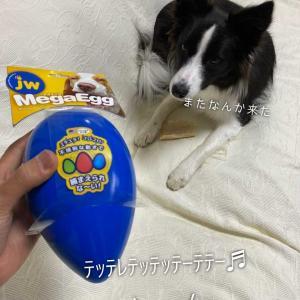 【Newおもちゃ】フォロワーさんありがとう✨😭✨