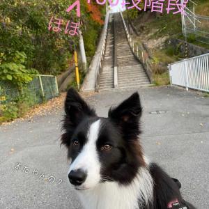 【リベンジ】あの階段ふたたび🔥