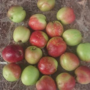 摘果した桃(ネクタリン)の利用