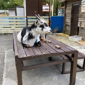 【大崎公園】無料で利用できる子供動物園!複合遊具もあり家族で一日楽しめます