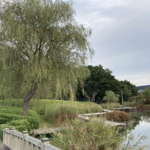【研究学園駅前公園】池・芝生・林のバランスがいい古民家のある駅前公園