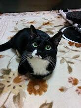 我が家の猫さん