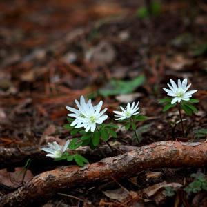 心が洗われる詩『「奥山の花」あつめ草より』