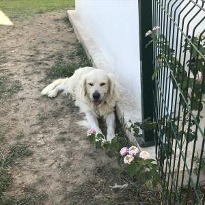 飼い犬が脱走しても自由に旅させてあげる国、トルコ