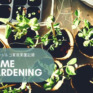 トルコで楽しむスローライフ🇹🇷✨ 家庭菜園の記録🌱